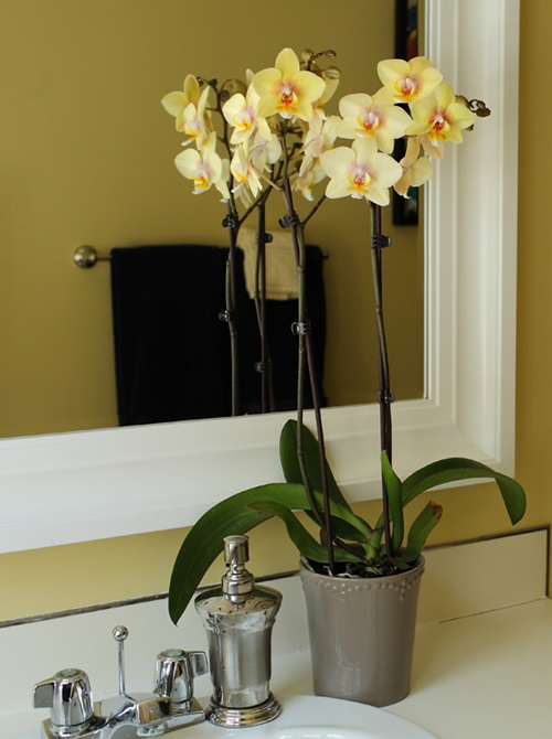 How-to-Decorate-Your-Home-Interior-with-Orchid-Flowers-16