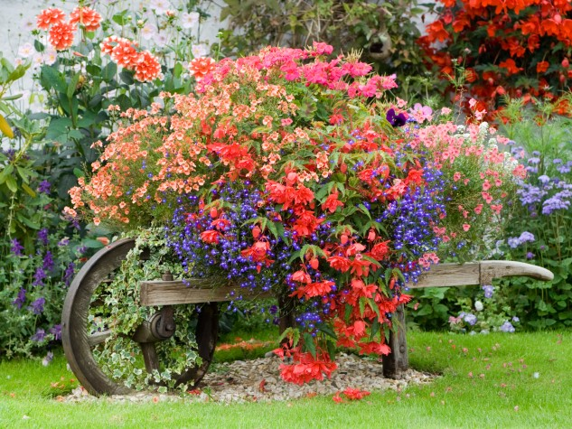 outstanding-garden-flower-for-garden-39-s-view-garden-pictures-of-gardens-633x475