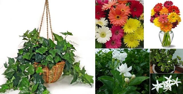 bedroom-plants