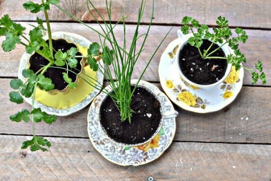tea-cup-planter-535x357